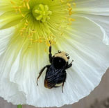 bee-on-a-flower